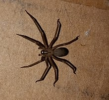 Spiders in Georgia – Everything You Need to Know
