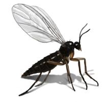 Gnat Repellents – How To Get Rid of Gnats?
