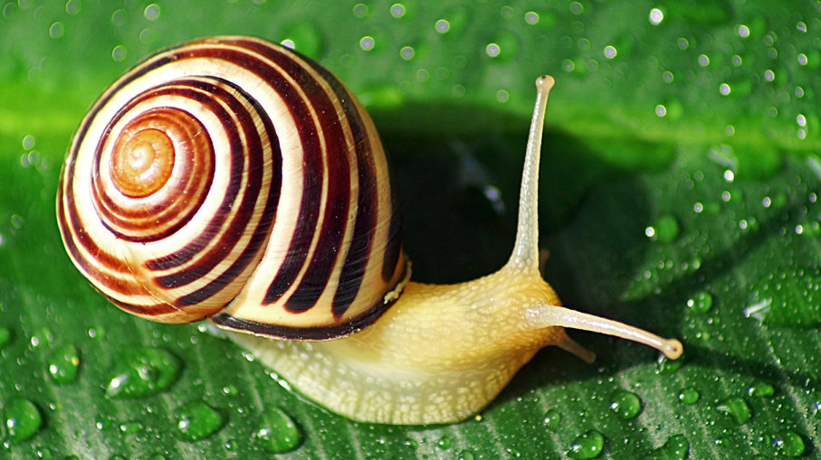 What Do Snails Eat? – Snails Food